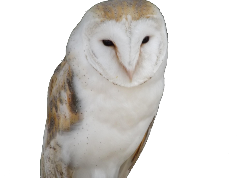 Owl trademark attorney Florida