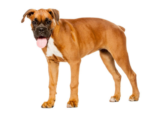 Dog Bite Attorney Review of Maddox v. FFBG